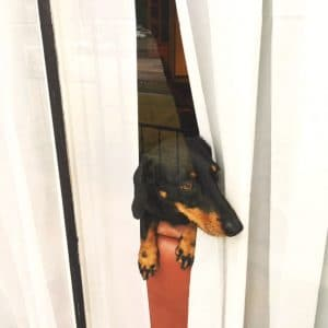 dog in window and the 5 mistakes homeowners make when selling